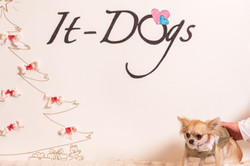 It-dogs-Natale2014-web-108.jpg
