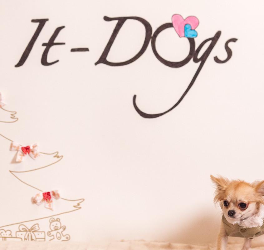 It-dogs-Natale2014-web-108