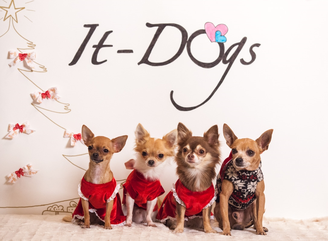 It-dogs-Natale2014-web-119.jpg