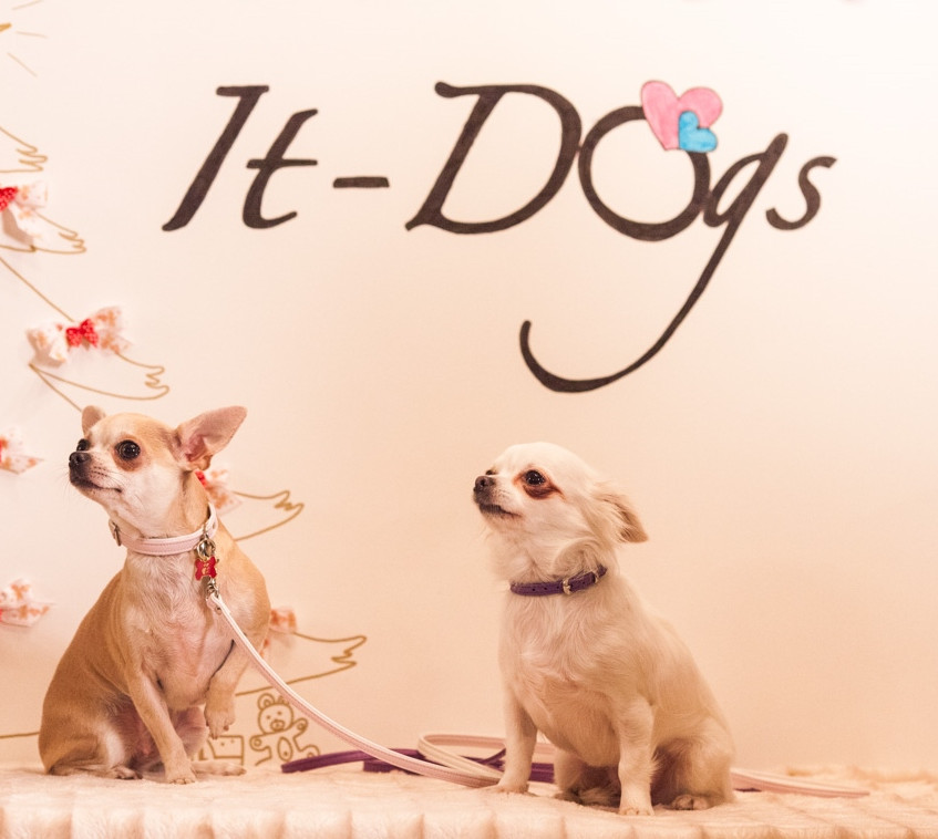 It-dogs-Natale2014-web-114
