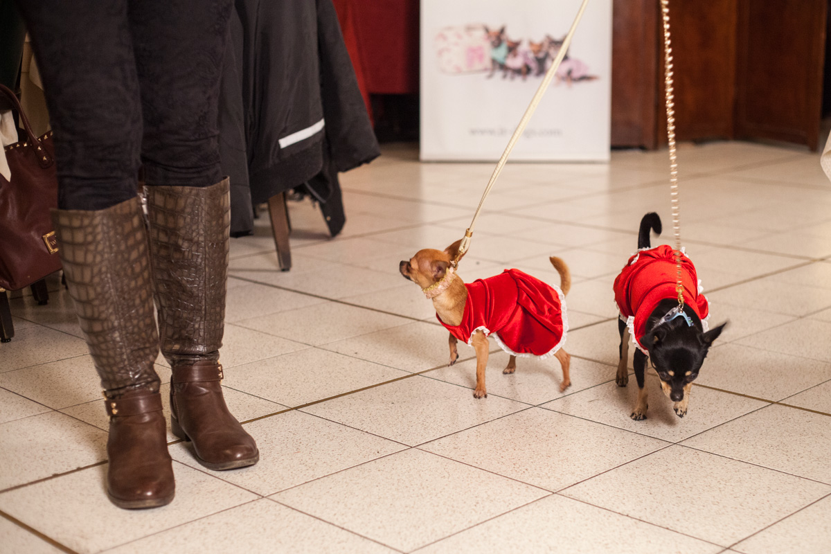 It-dogs-Natale2014-web-096.jpg
