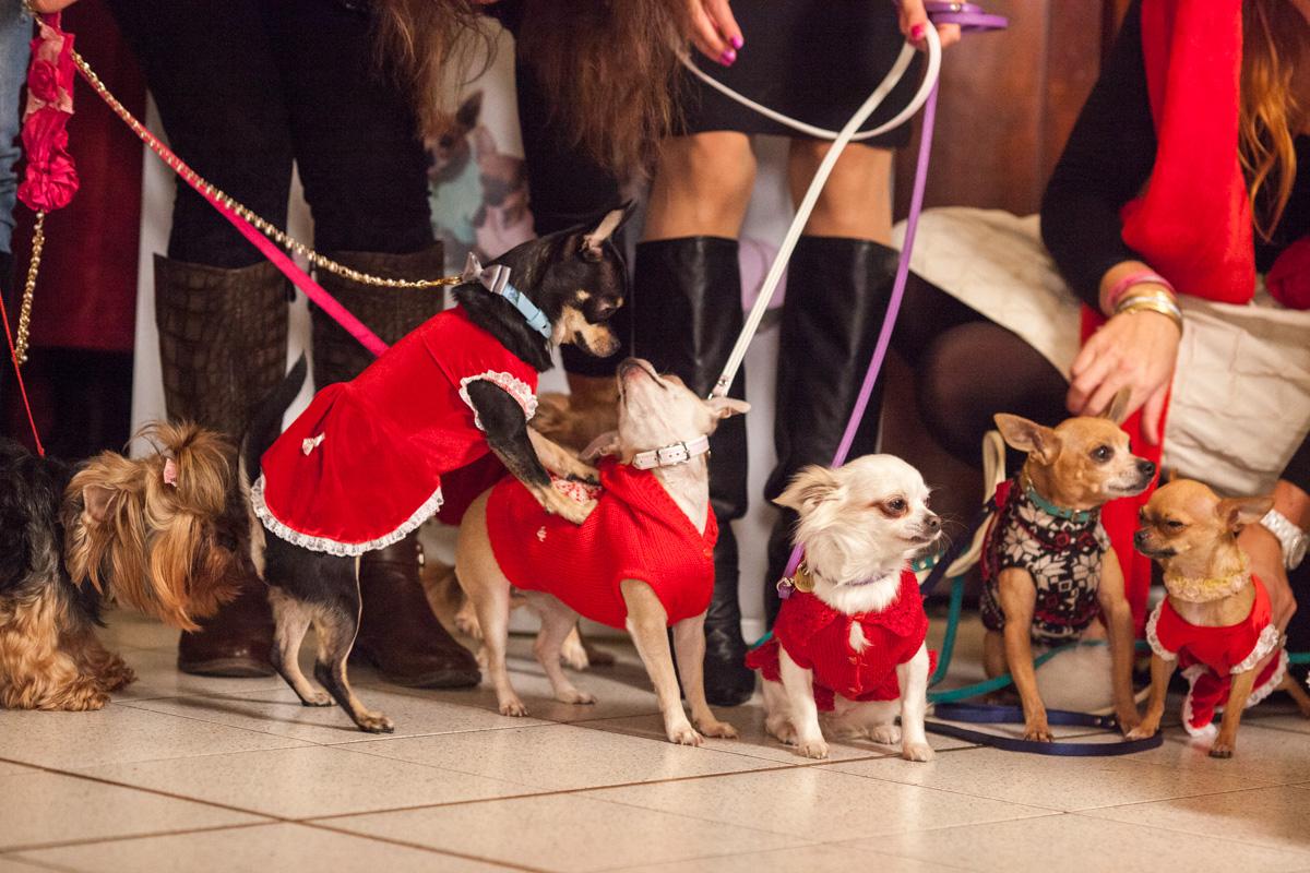 It-dogs-Natale2014-web-103.jpg