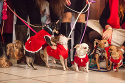 It-dogs-Natale2014-web-103.jpg