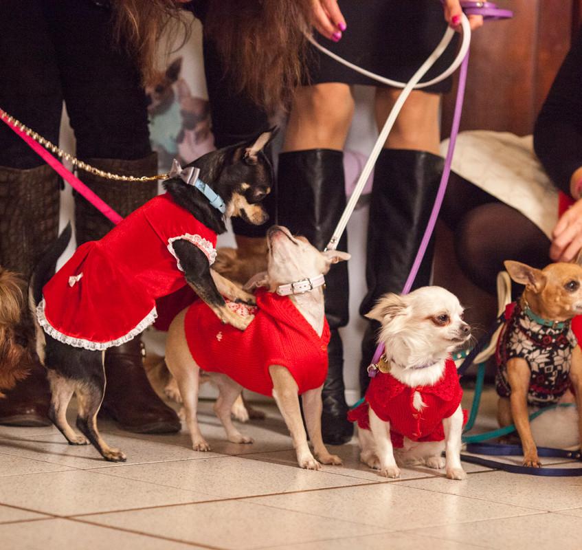 It-dogs-Natale2014-web-103