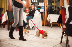 It-dogs-Natale2014-web-033.jpg