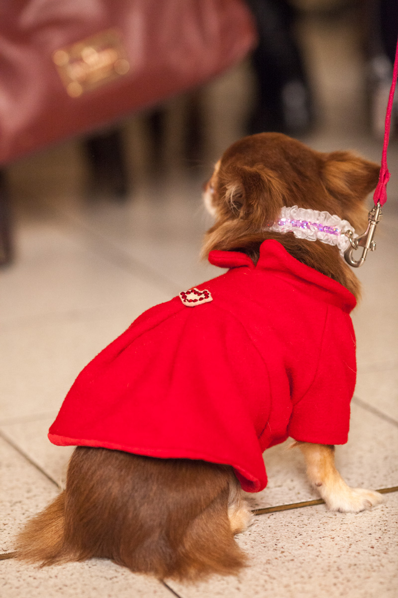 It-dogs-Natale2014-web-101.jpg