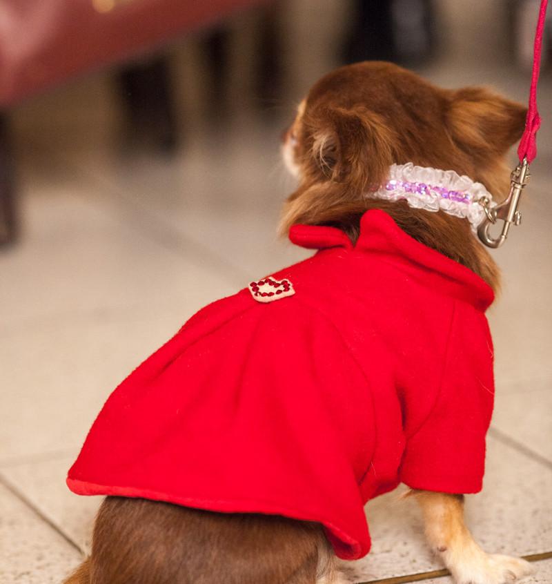 It-dogs-Natale2014-web-101