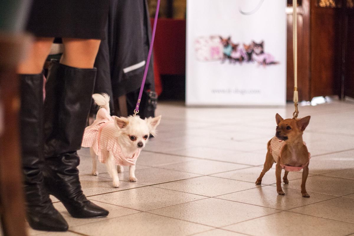 It-dogs-Natale2014-web-043.jpg