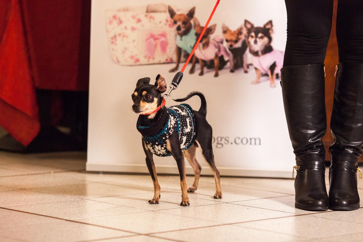 It-dogs-Natale2014-web-066.jpg