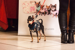 It-dogs-Natale2014-web-066.jpg