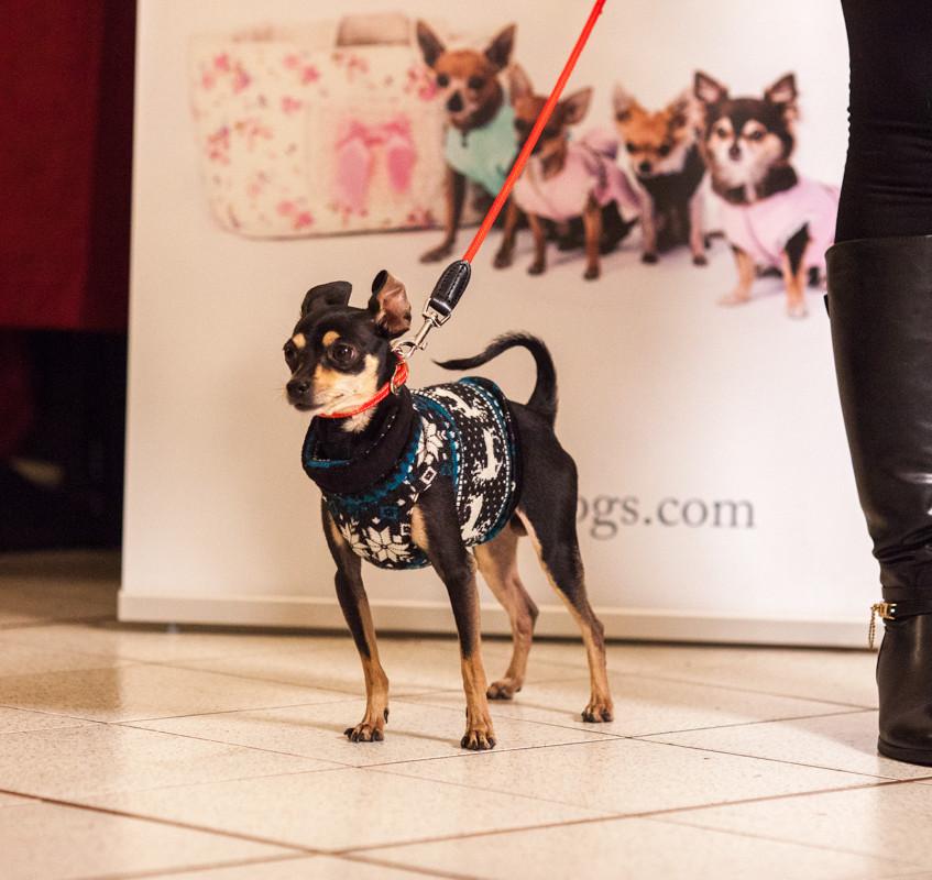 It-dogs-Natale2014-web-066