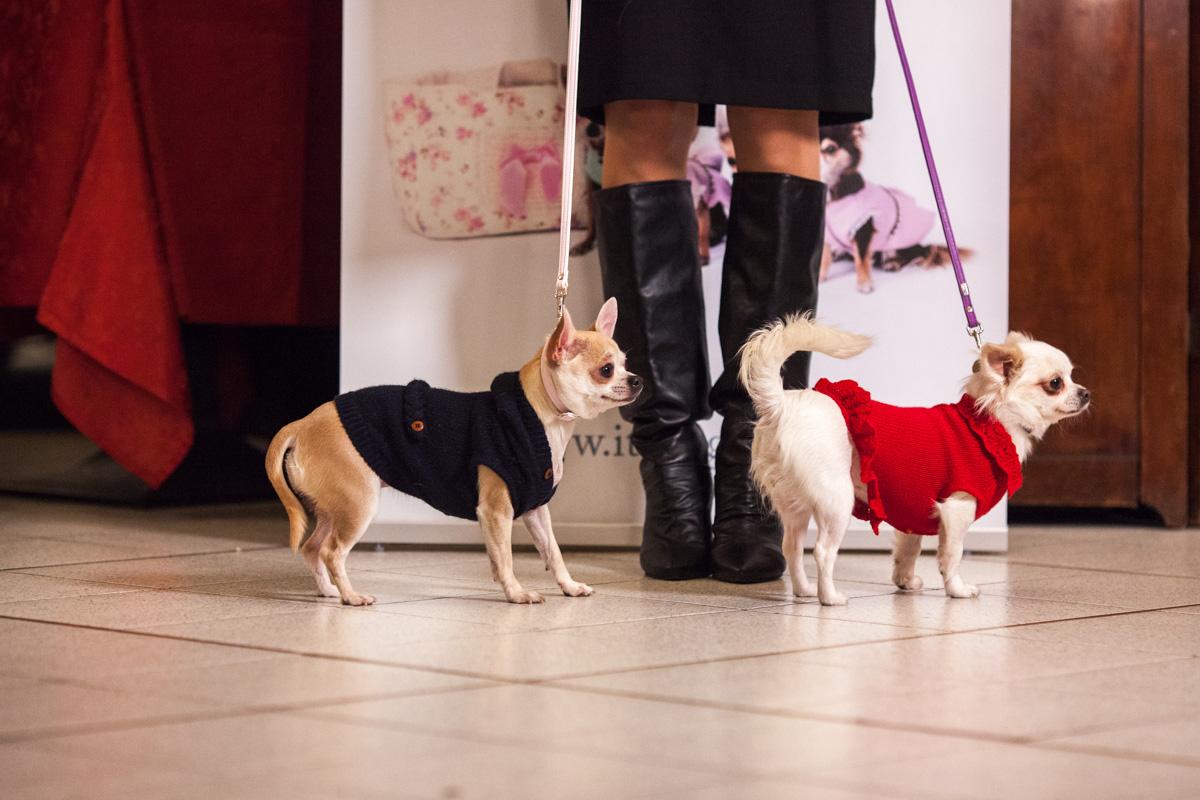 It-dogs-Natale2014-web-038.jpg