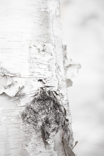 Jess McShane Photography - Fine Art - Made in the North Collection 0003.jpg