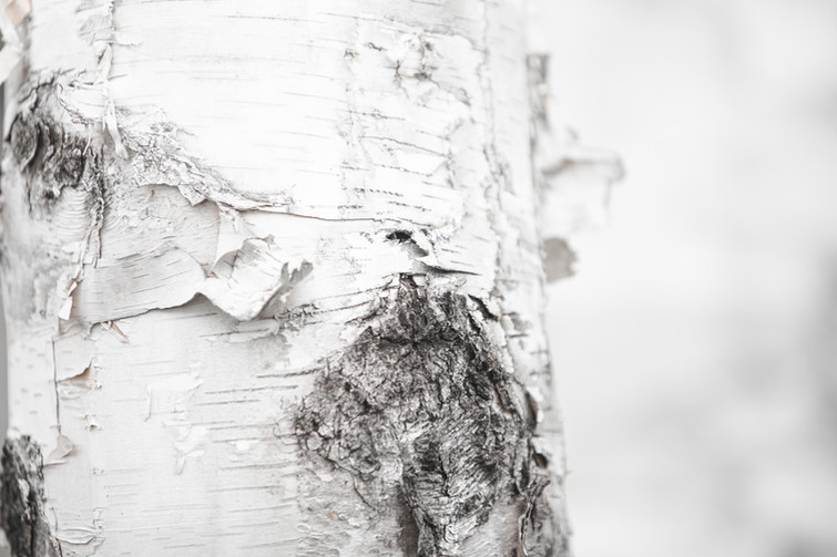 Jess McShane Photography - Fine Art - Made in the North Collection 0002.jpg