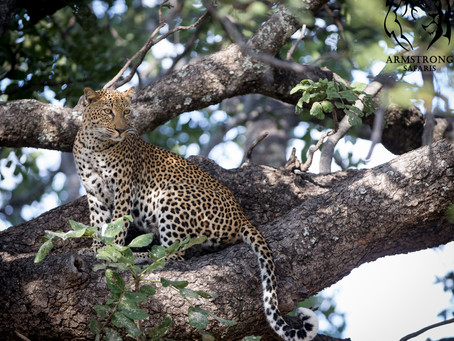 South Luangwa Late Season Special: A Wildlife Photographer's Dream