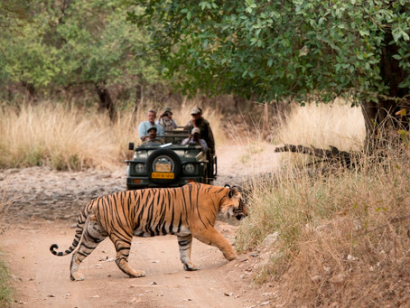 LUXURY RAJASTHAN TIGER, LEOPARD & CULTURAL SAFARI WITH ARMSTRONG SAFARIS AND BESPOKE INDIA TRAVEL