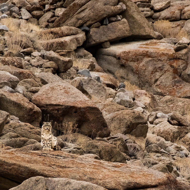 Snow Leopard Conservation Expedition