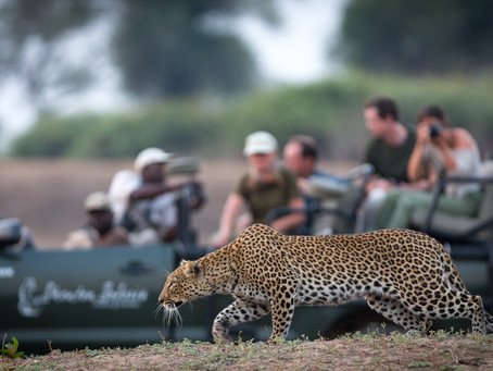 South Luangwa Late Season Special 2021: A Wildlife Photographer's Dream