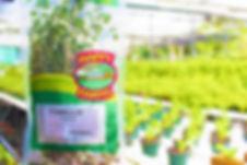 Tomillo Hierba | Happy Farms