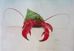Red Fidgety Crab