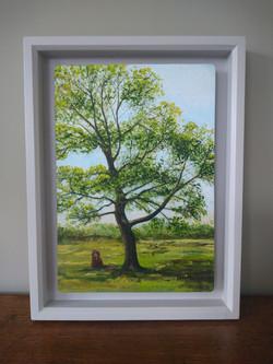 """Georgia's Favourite Tree"""