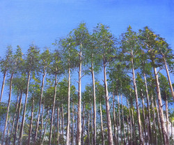 Pines Against the Blue
