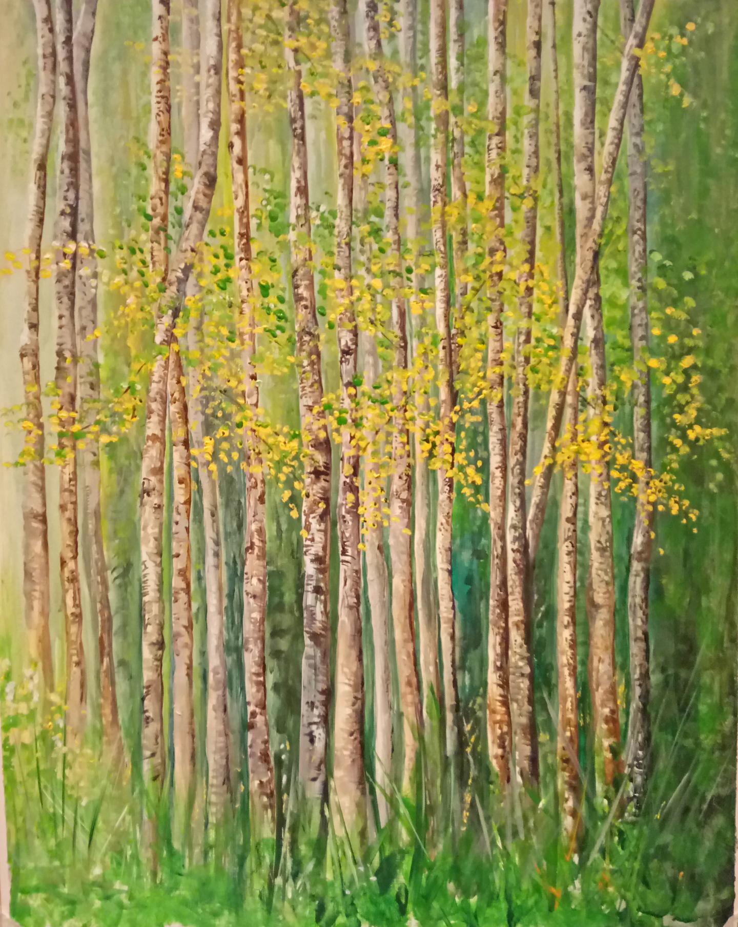 """""""Silver Birch, Spring Fresh"""""""