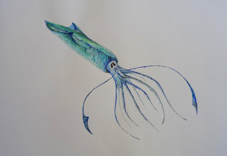 Blue Skittish Squid