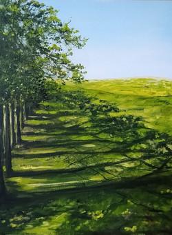 """Shadow Trees"""