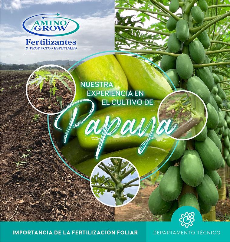 5. Nuestra experiencia en Papaya-01.jpg