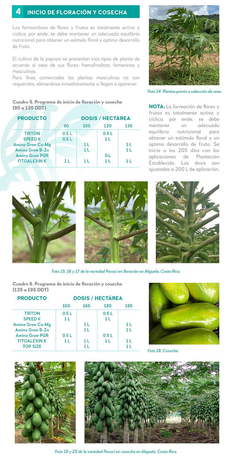 5. Nuestra experiencia en Papaya-06.jpg
