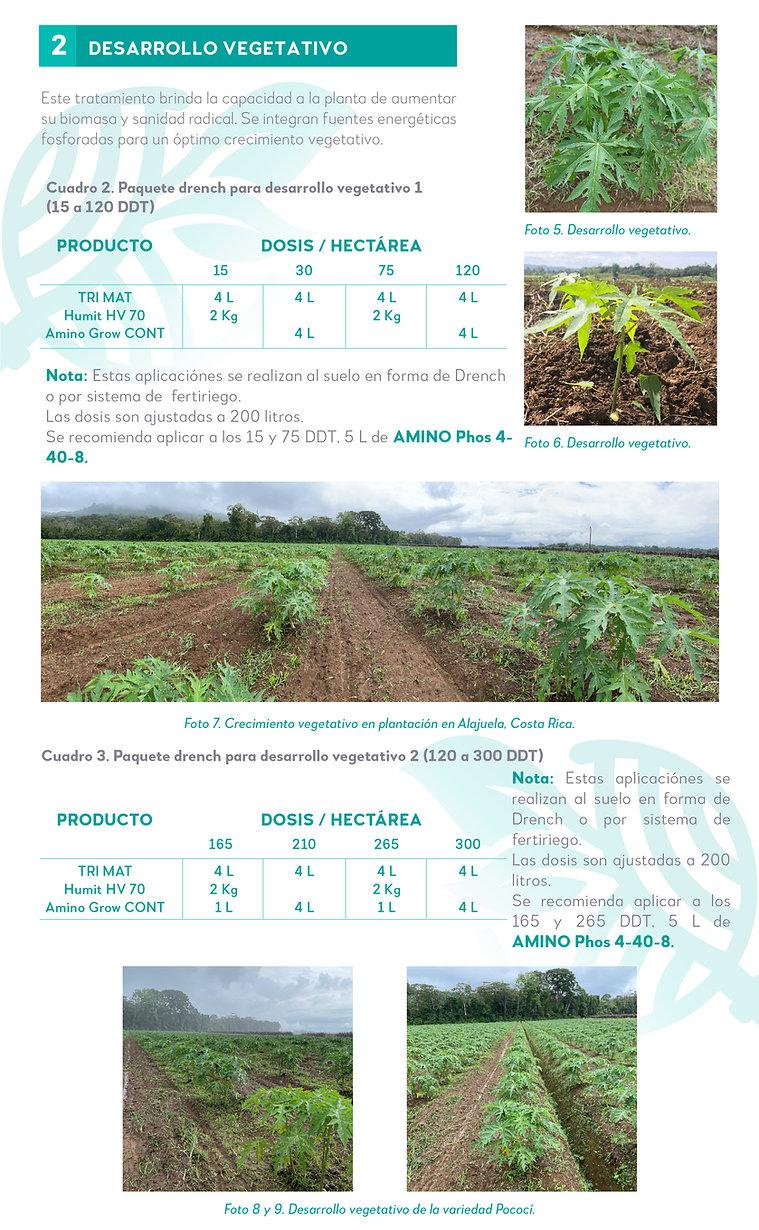5. Nuestra experiencia en Papaya-04.jpg