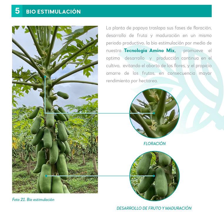 5. Nuestra experiencia en Papaya-07.jpg