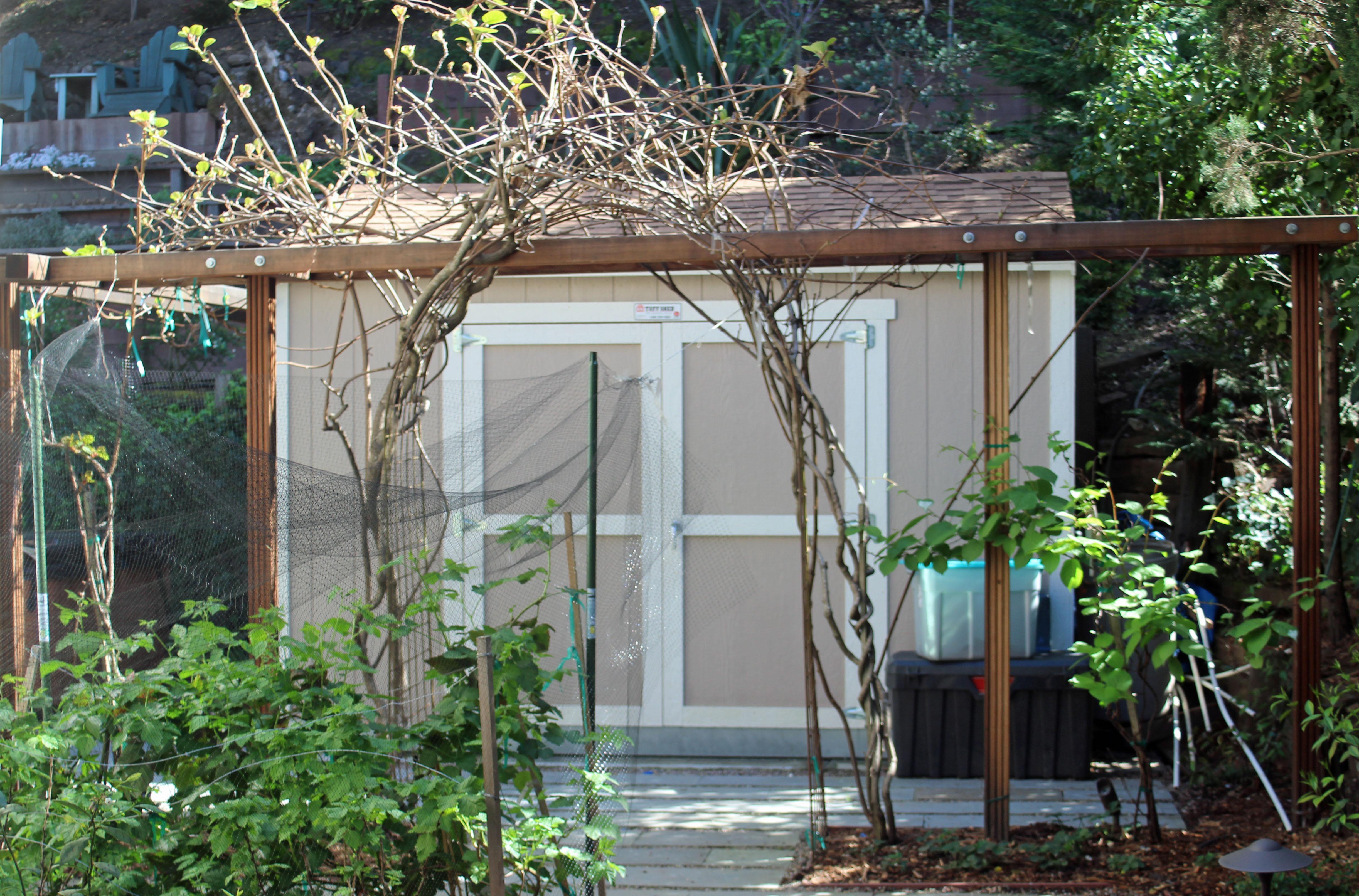 Backyard Kiwi Trellis and Shed
