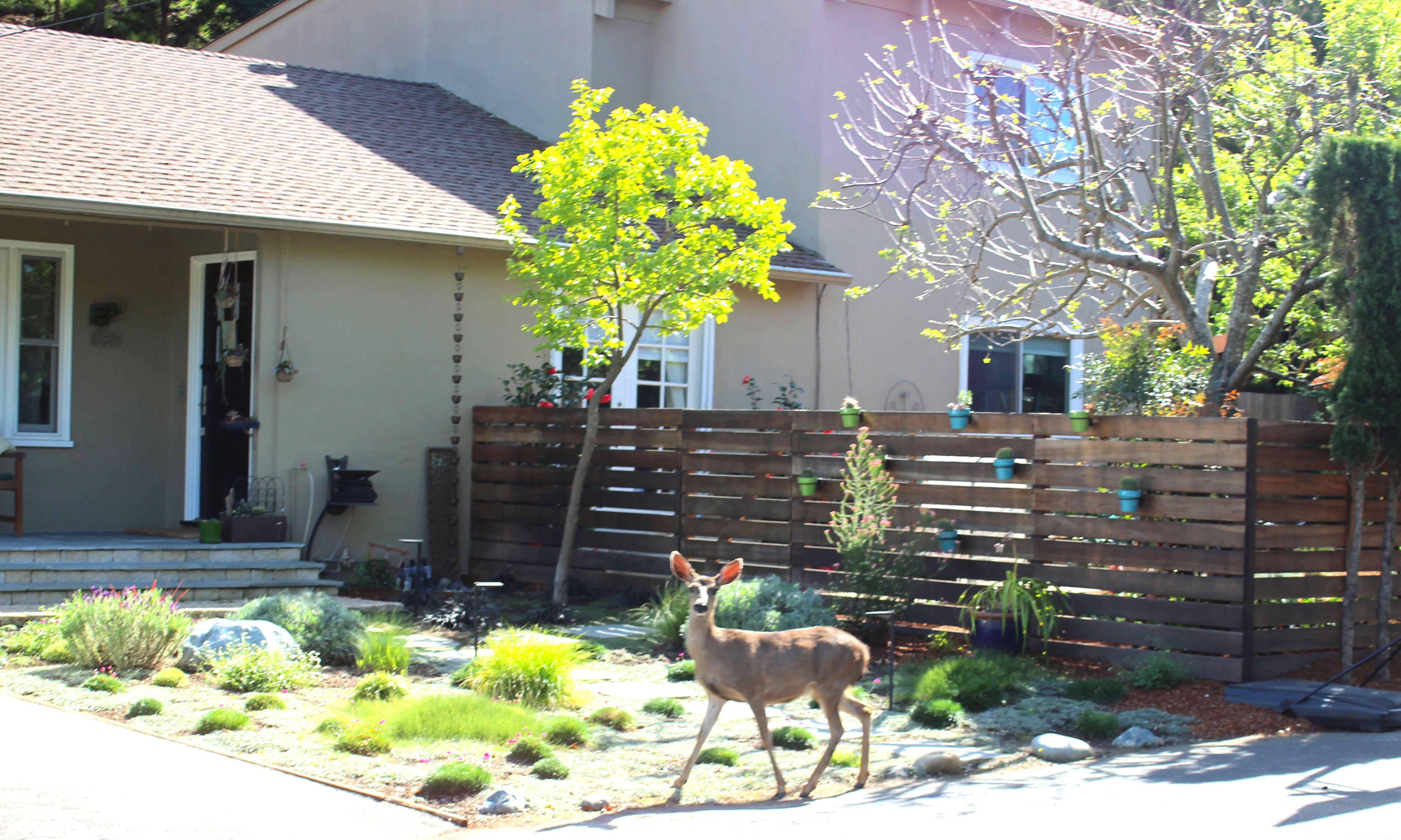 Frontyard with Deer