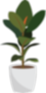 Rubber plant.png