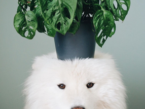 15 pictures of pets & houseplants 🐶