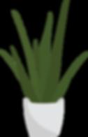Alovera plant.png