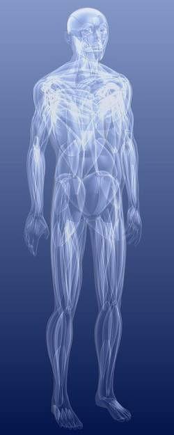 Fasziennetz des Körpers, Körperfaszie, Faszien, Bindegewebe, Faziennetz
