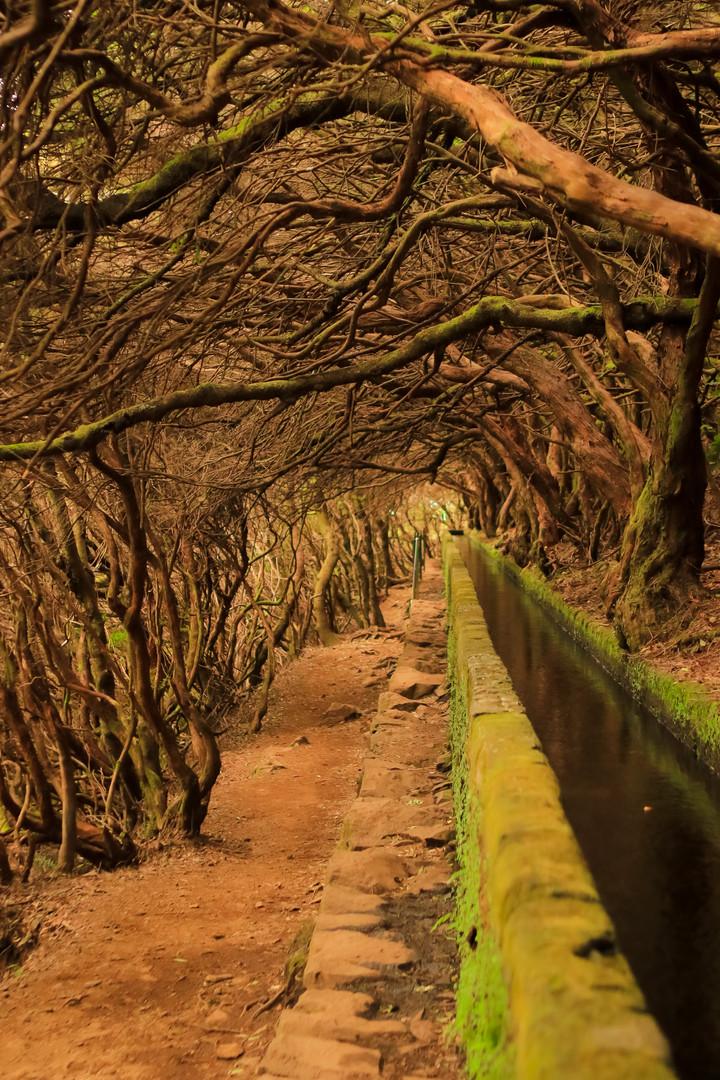 Rabaçal Trail - Madeira Island