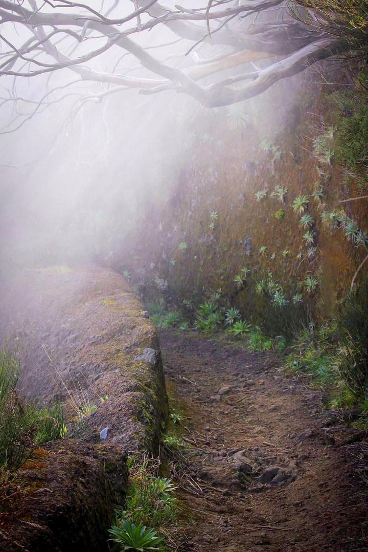 Areeiro Peak Trail -