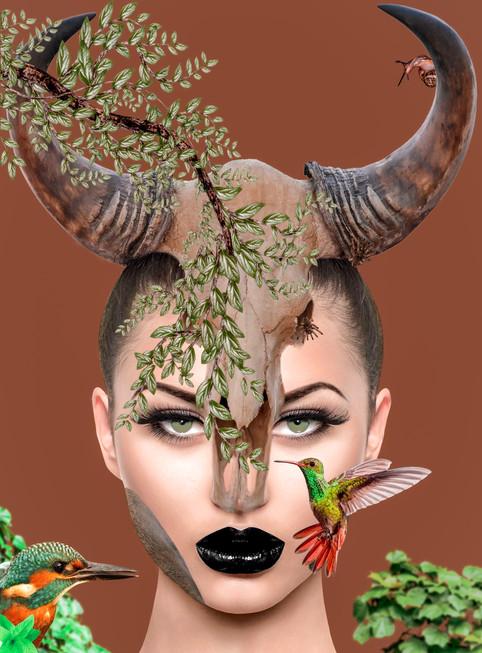 Animal Spring II