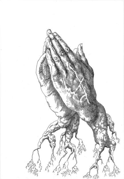 Racines (d'après Dürer)
