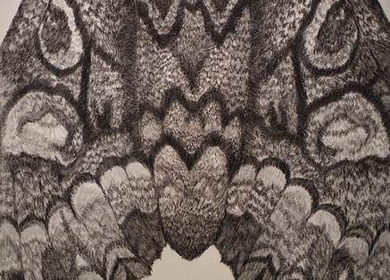 Les ocelles (détail)