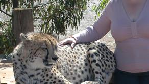 Understanding Animals – Benefits of animal communication