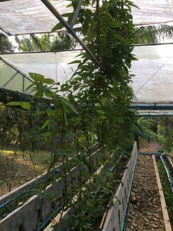 Eco-Logic Aquaponic Farm