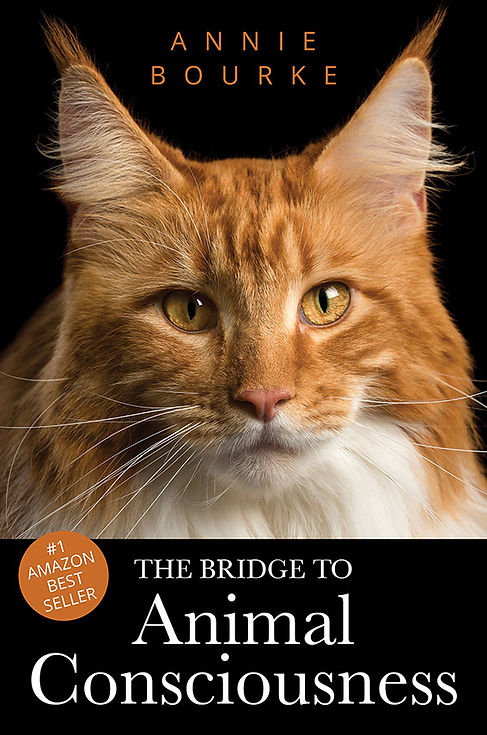 Annie Bourke - The Bridge To Animal Cons