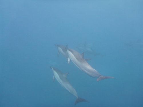 Annie  Bourke - Dolphin swim in Hawaii.J