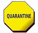 Quarantine.jfif