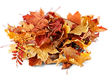 pile of leaves2.png